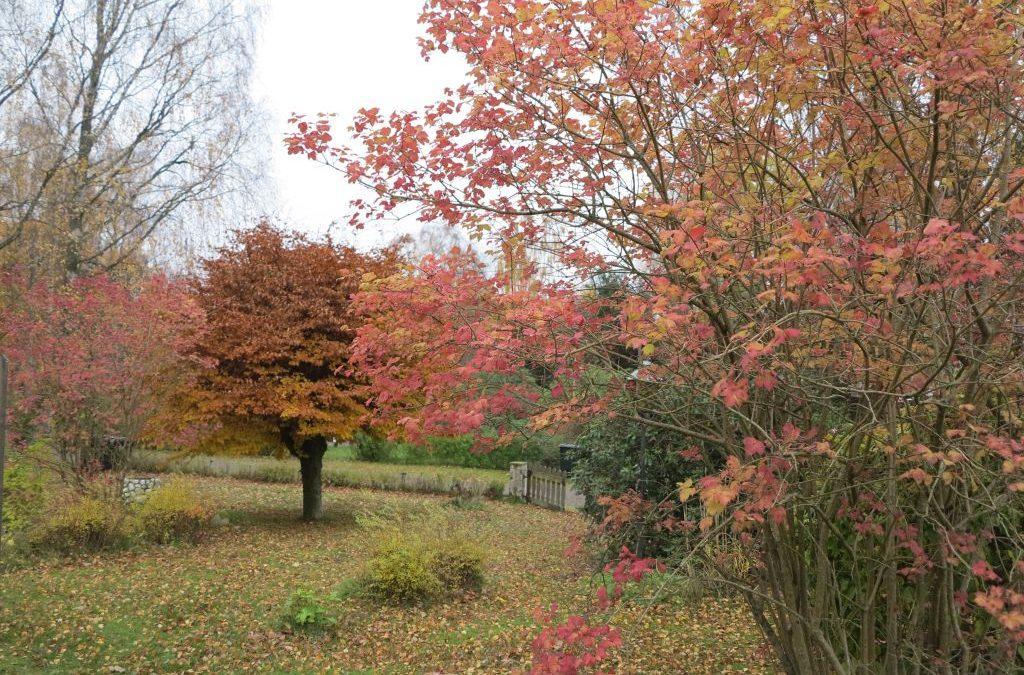 Måndag Fortfarande härliga färger i naturen och trädgården