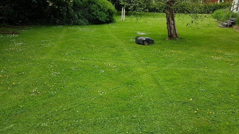 Tisdag Ernst kör bil, Valdemar klipper gräs och jag cyklar spinning