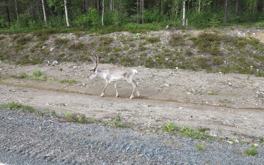 Onsdag Från Norrbotten till Ångermanland